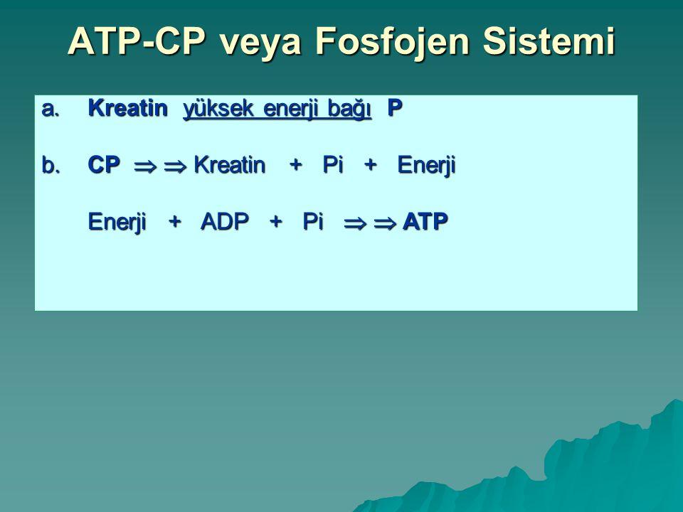 ATP-CP veya Fosfojen Sistemi