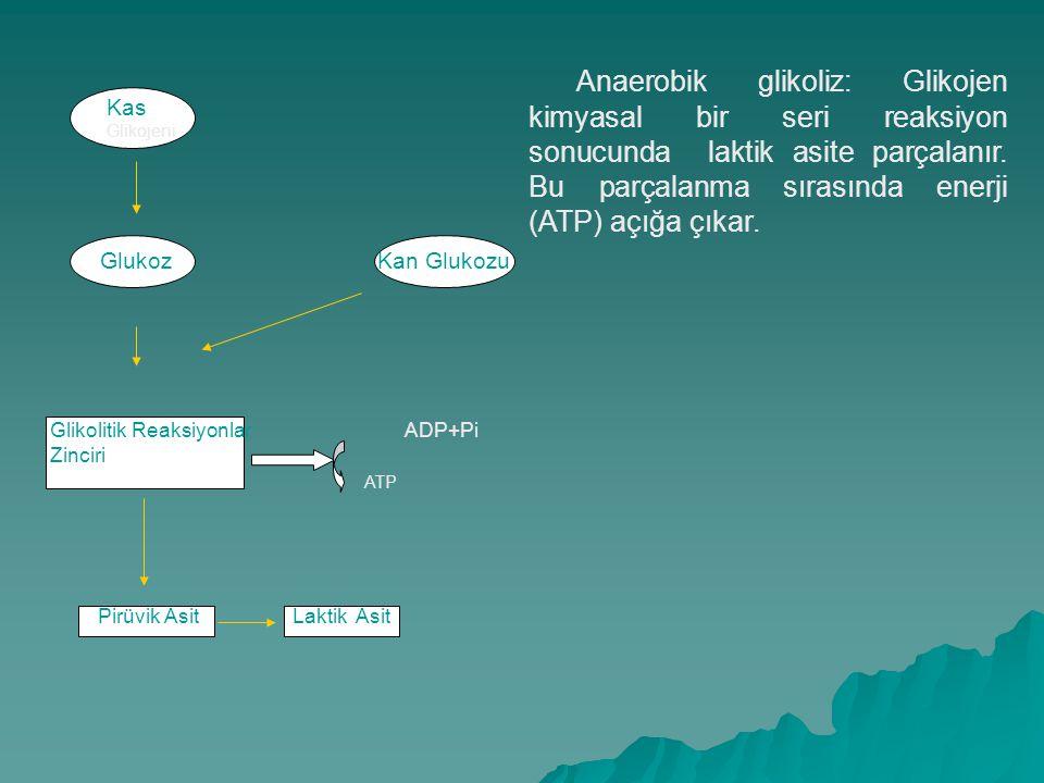 Anaerobik glikoliz: Glikojen kimyasal bir seri reaksiyon sonucunda laktik asite parçalanır. Bu parçalanma sırasında enerji (ATP) açığa çıkar.