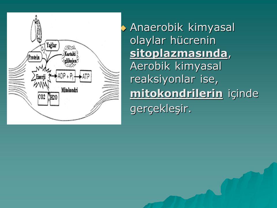 Anaerobik kimyasal olaylar hücrenin sitoplazmasında, Aerobik kimyasal reaksiyonlar ise, mitokondrilerin içinde gerçekleşir.