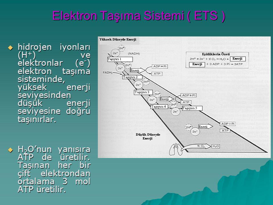 Elektron Taşıma Sistemi ( ETS )