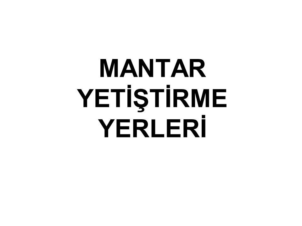MANTAR YETİŞTİRME YERLERİ