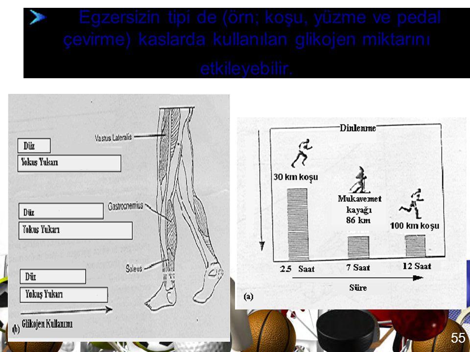 Egzersizin tipi de (örn; koşu, yüzme ve pedal çevirme) kaslarda kullanılan glikojen miktarını etkileyebilir.