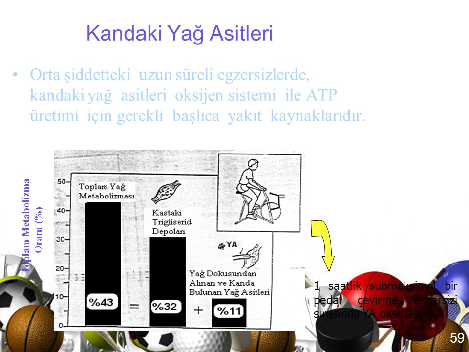 Toplam Metabolizma Oranı (%)