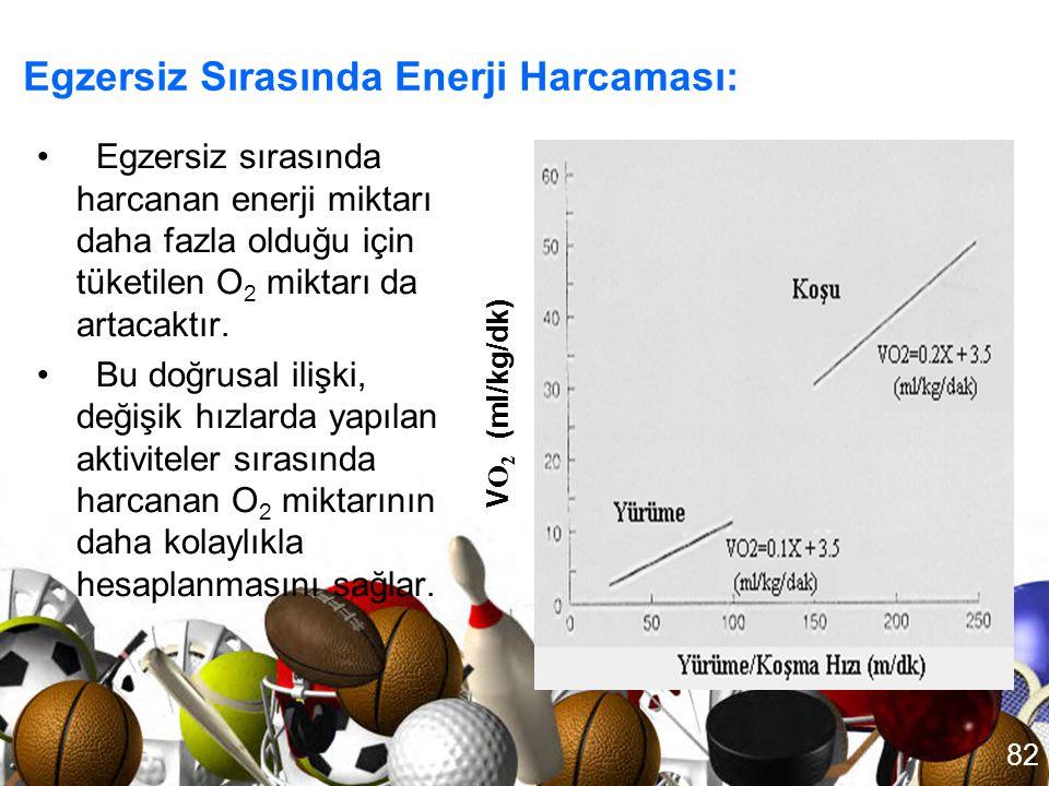 Egzersiz Sırasında Enerji Harcaması: