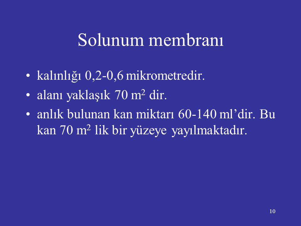 Solunum membranı kalınlığı 0,2-0,6 mikrometredir.