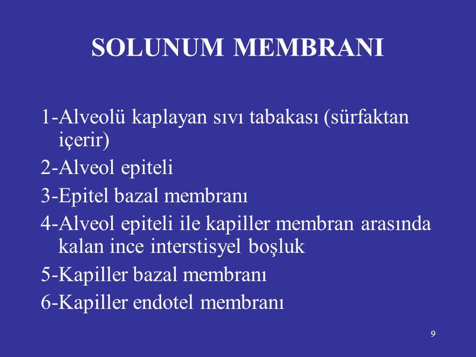 SOLUNUM MEMBRANI 1-Alveolü kaplayan sıvı tabakası (sürfaktan içerir)