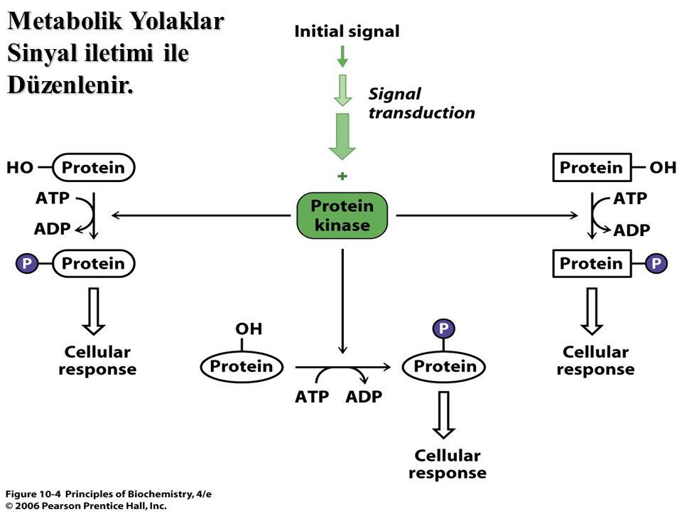 Metabolik Yolaklar Sinyal iletimi ile Düzenlenir.