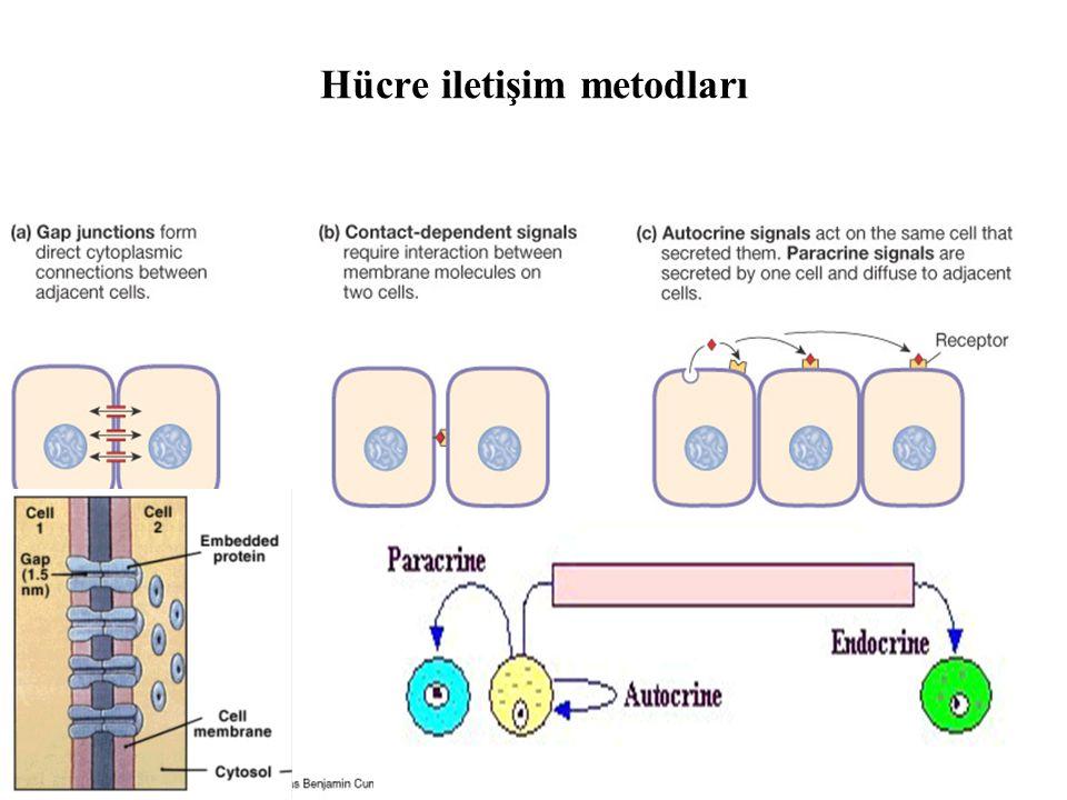 Hücre iletişim metodları