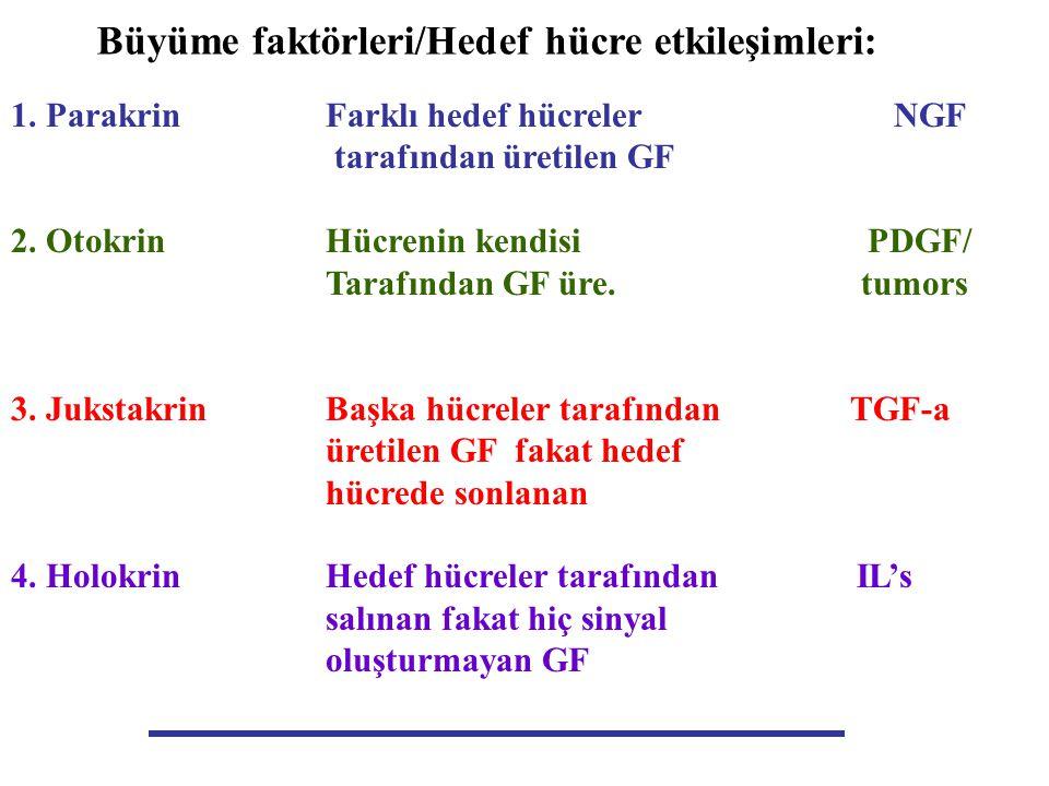 Büyüme faktörleri/Hedef hücre etkileşimleri: