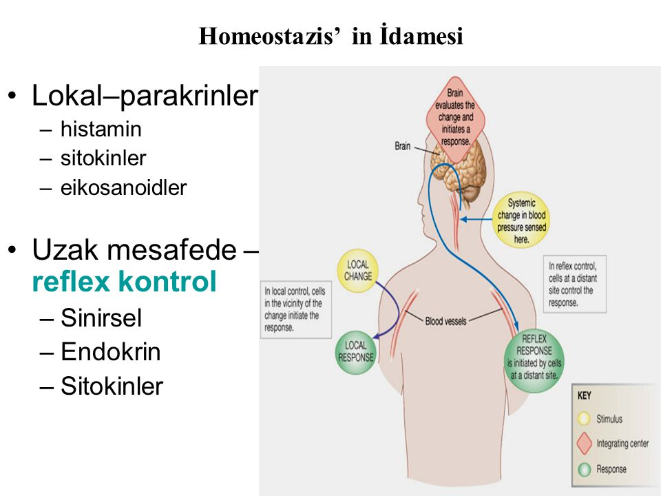 Homeostazis' in İdamesi