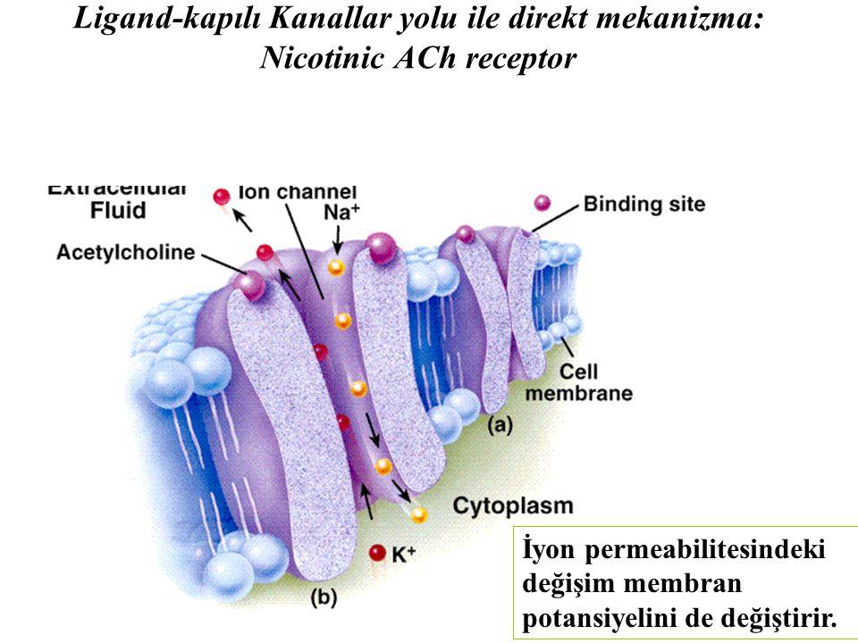 Ligand-kapılı Kanallar yolu ile direkt mekanizma: Nicotinic ACh receptor