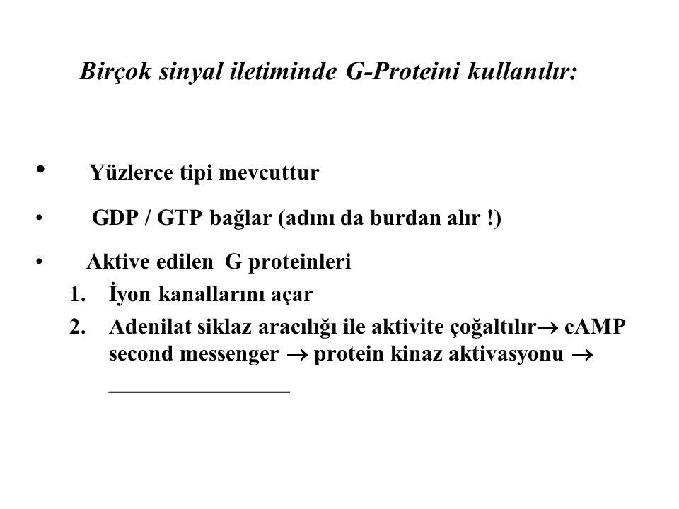 Birçok sinyal iletiminde G-Proteini kullanılır: