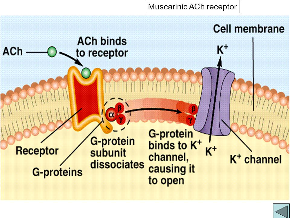 G - Protein mediated Signal Transduction