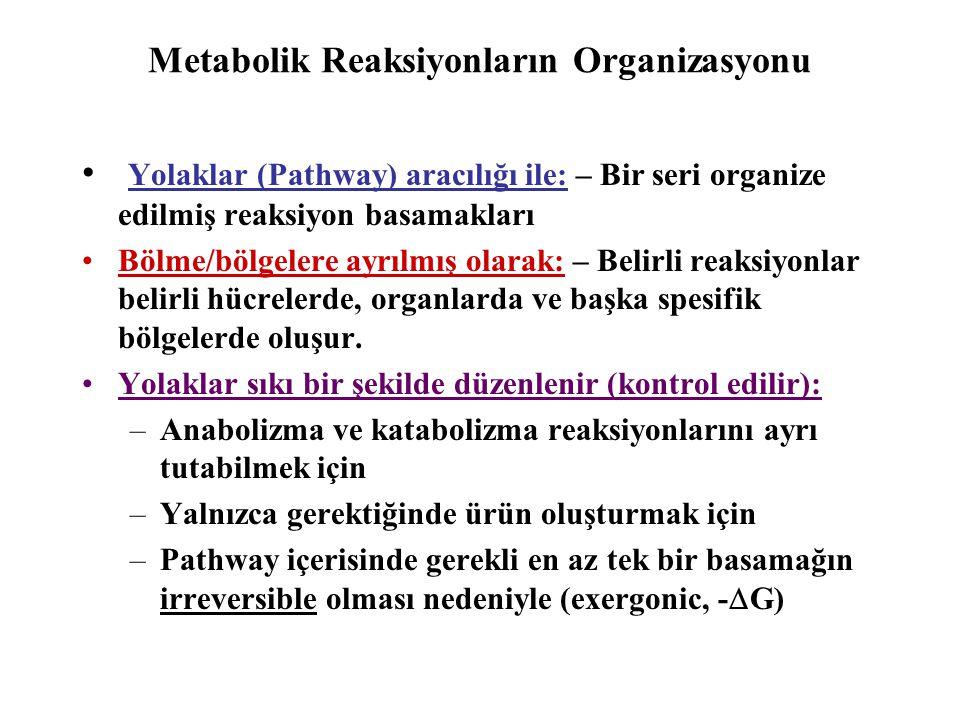 Metabolik Reaksiyonların Organizasyonu