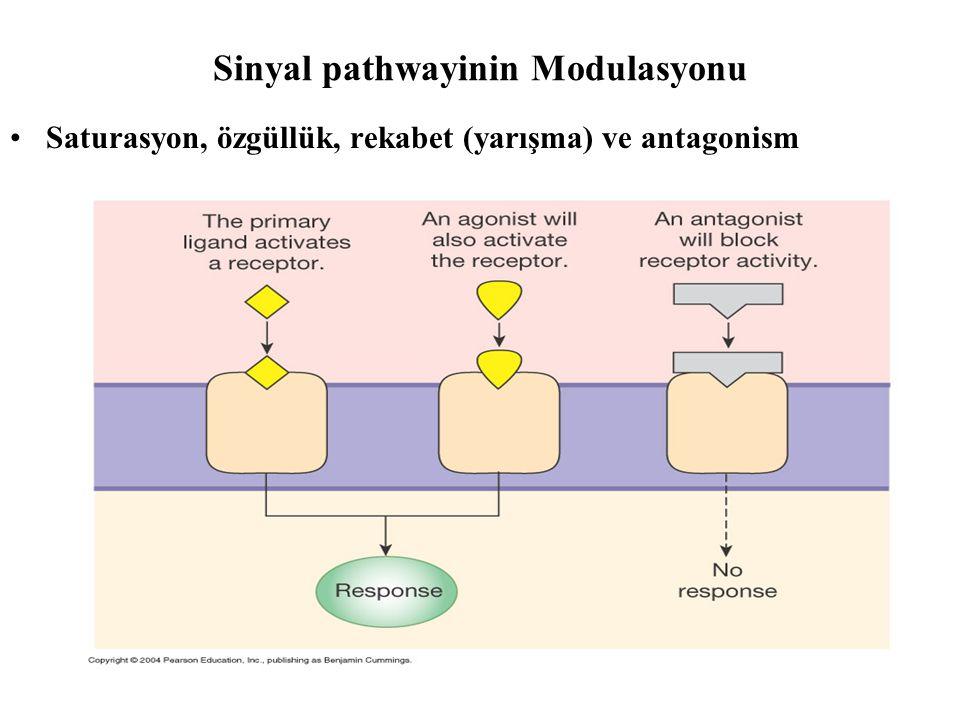 Sinyal pathwayinin Modulasyonu
