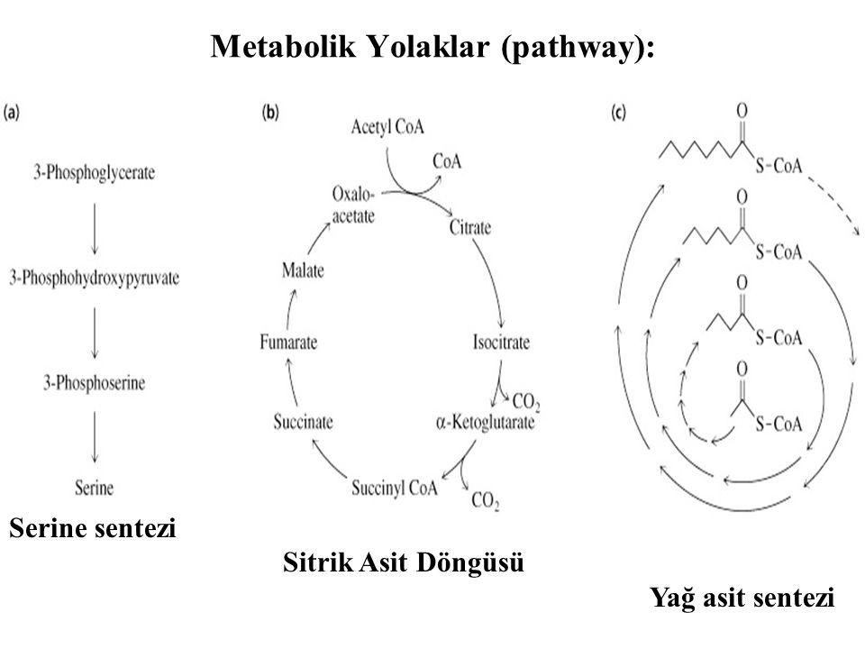 Metabolik Yolaklar (pathway):