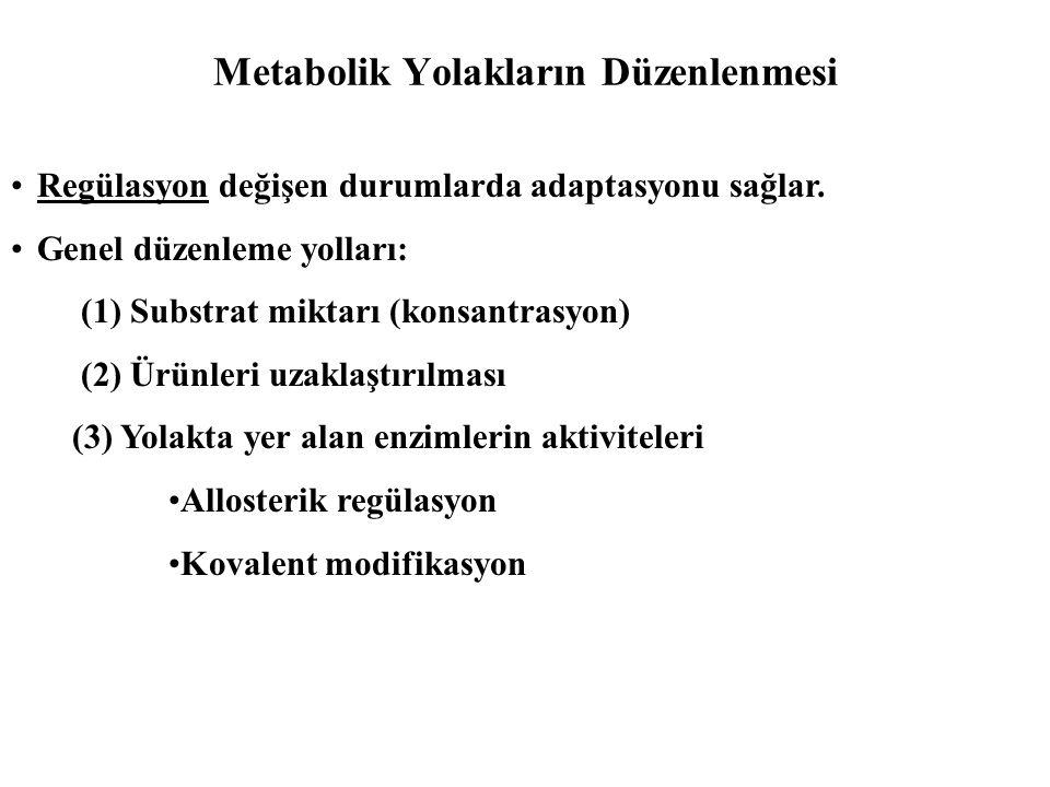 Metabolik Yolakların Düzenlenmesi