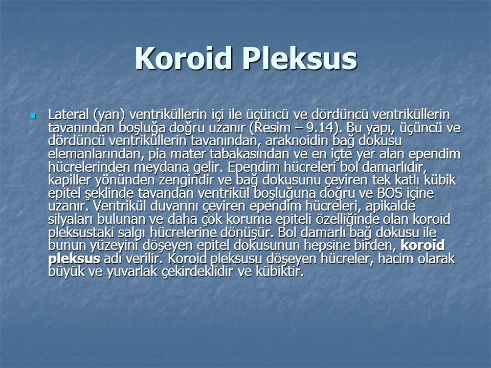 Koroid Pleksus