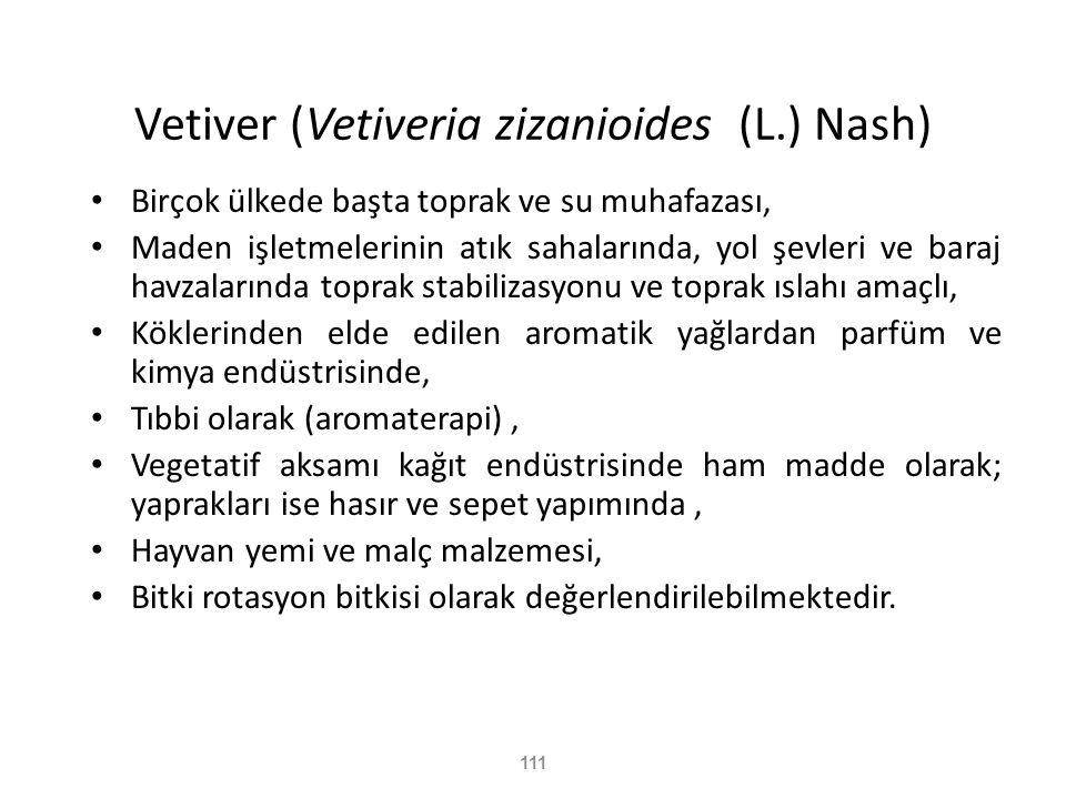 Vetiver (Vetiveria zizanioides (L.) Nash)