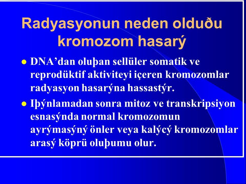 Radyasyonun neden olduðu kromozom hasarý