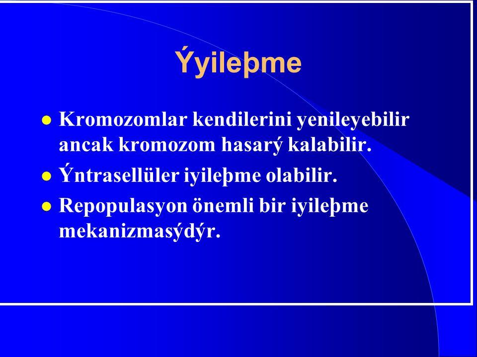 Ýyileþme Kromozomlar kendilerini yenileyebilir ancak kromozom hasarý kalabilir. Ýntrasellüler iyileþme olabilir.