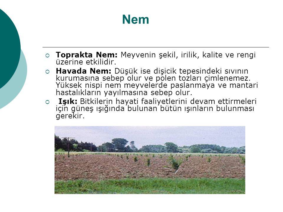Nem Toprakta Nem: Meyvenin şekil, irilik, kalite ve rengi üzerine etkilidir.