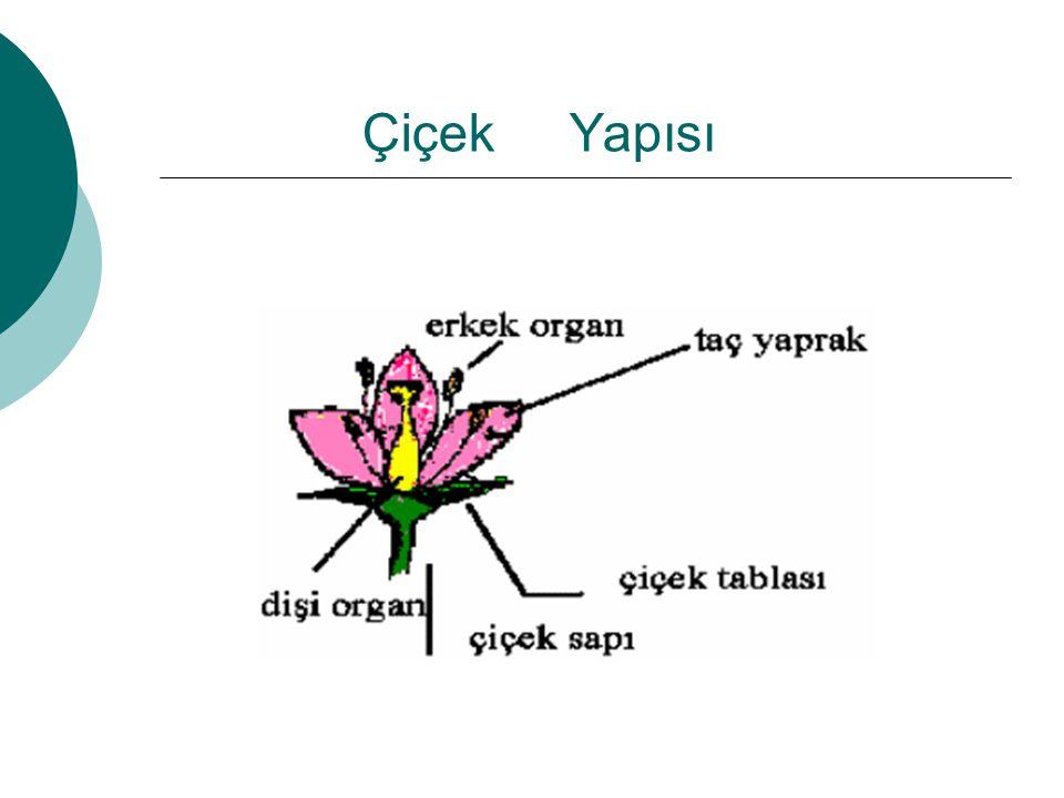 Çiçek Yapısı