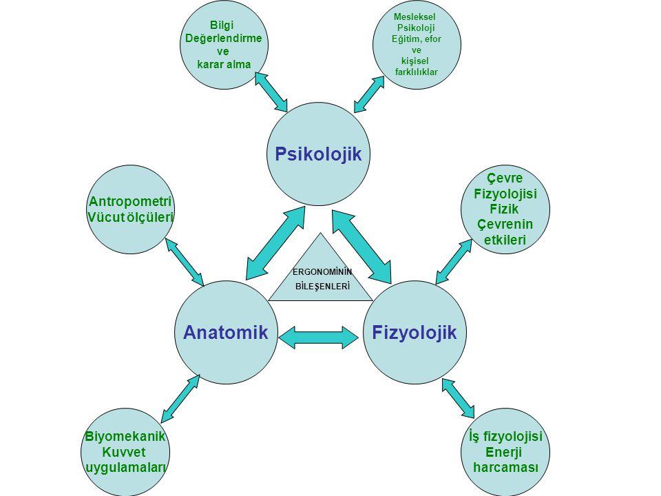 Anatomik Fizyolojik Psikolojik
