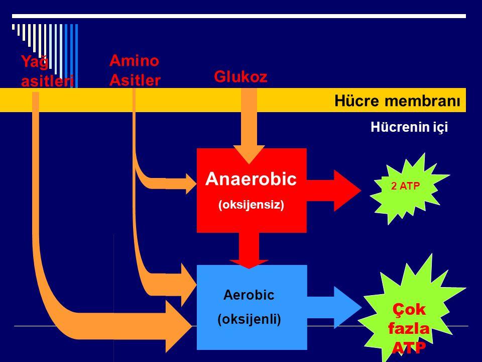 Anaerobic Yağ asitleri AminoAsitler Glukoz Hücre membranı