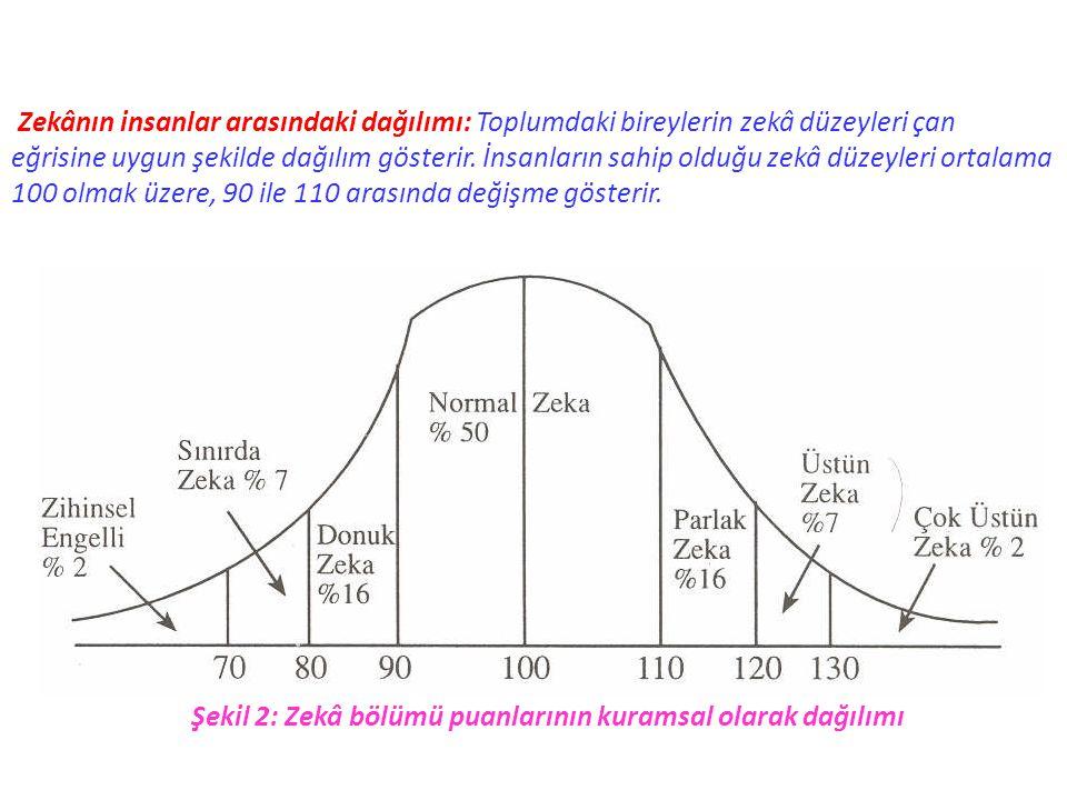 Zekânın insanlar arasındaki dağılımı: Toplumdaki bireylerin zekâ düzeyleri çan
