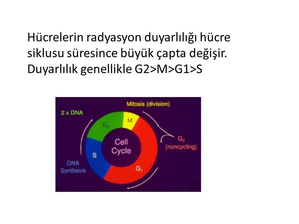 Hücrelerin radyasyon duyarlılığı hücre siklusu süresince büyük çapta değişir.