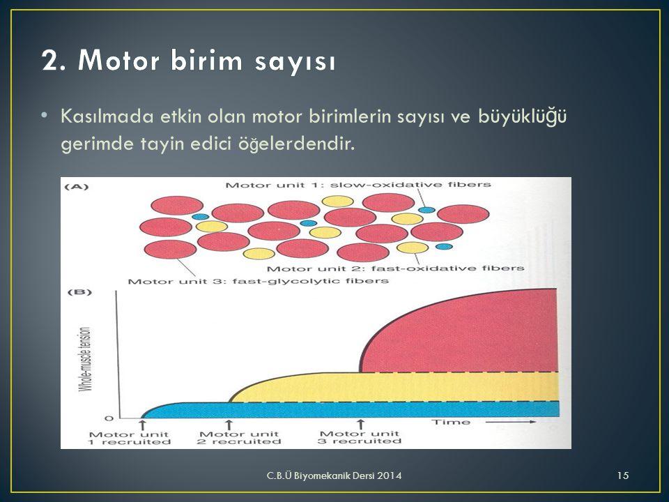 2. Motor birim sayısı Kasılmada etkin olan motor birimlerin sayısı ve büyüklüğü gerimde tayin edici öğelerdendir.