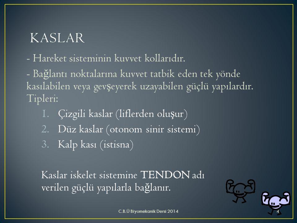 KASLAR - Hareket sisteminin kuvvet kollarıdır.