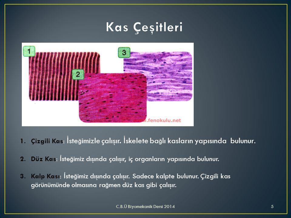 Kas Çeşitleri Çizgili Kas: İsteğimizle çalışır. İskelete bağlı kasların yapısında bulunur.