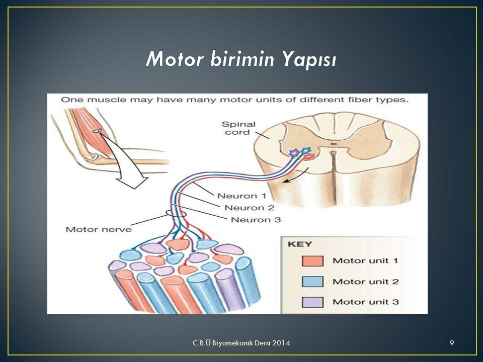 Motor birimin Yapısı C.B.Ü Biyomekanik Dersi 2014
