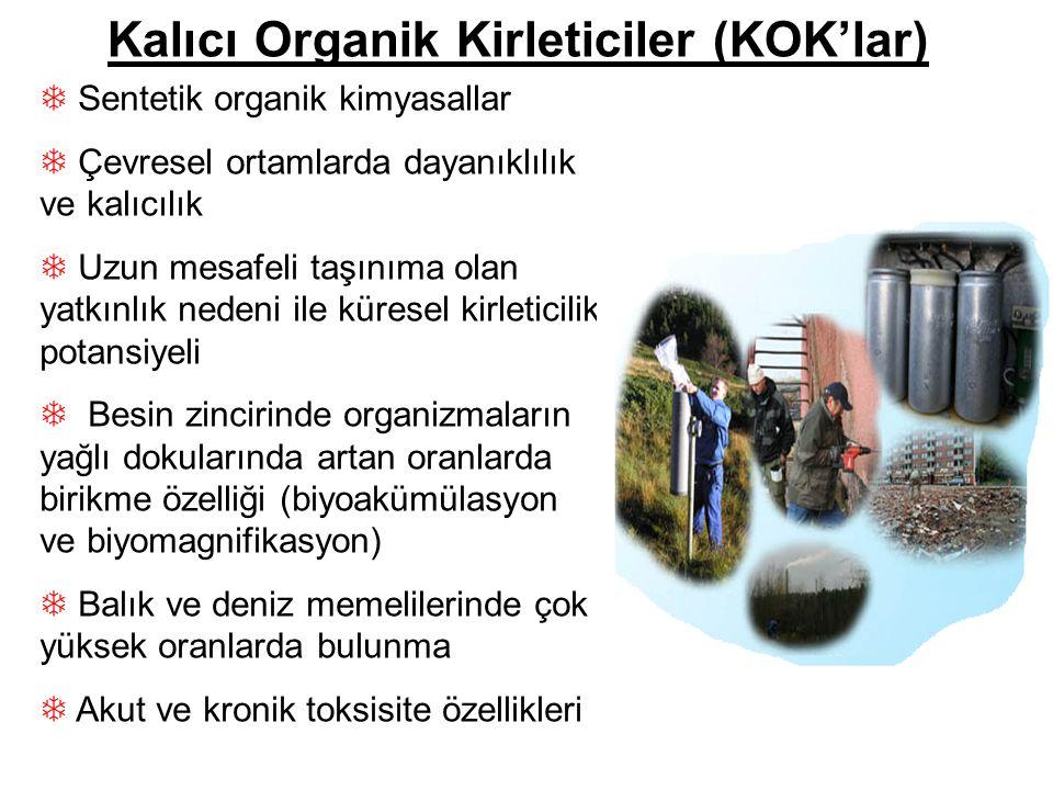 Kalıcı Organik Kirleticiler (KOK'lar)
