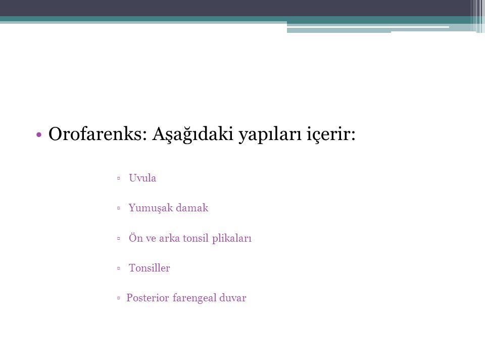 Orofarenks: Aşağıdaki yapıları içerir: