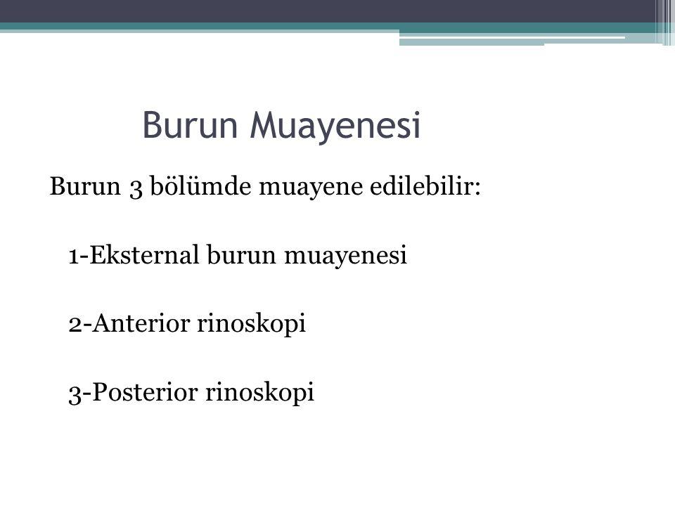 Burun Muayenesi Burun 3 bölümde muayene edilebilir:
