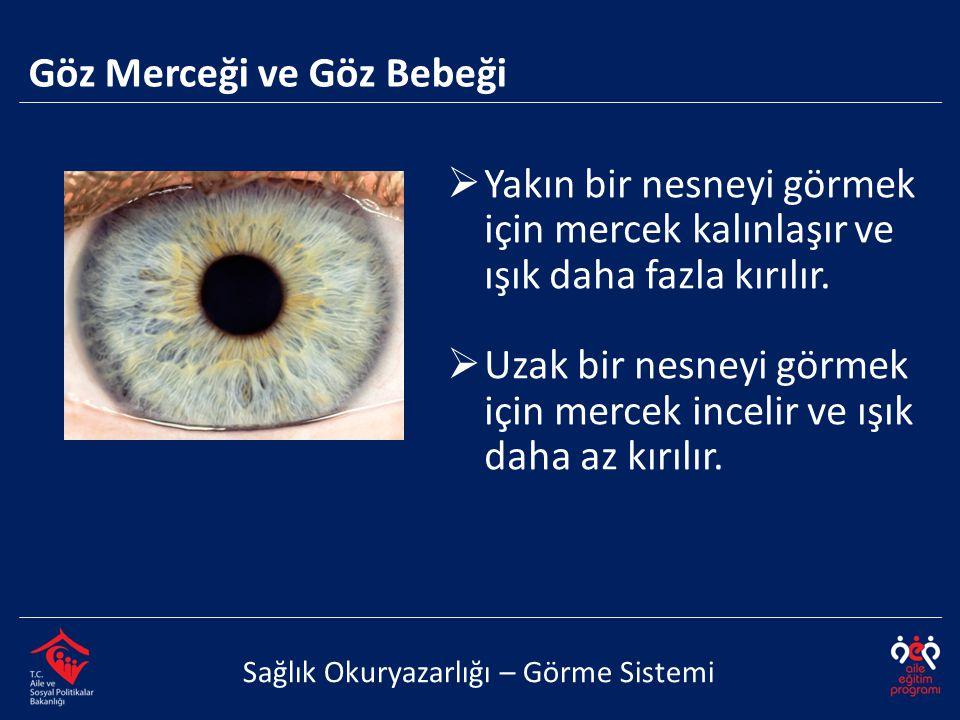 Göz Merceği ve Göz Bebeği