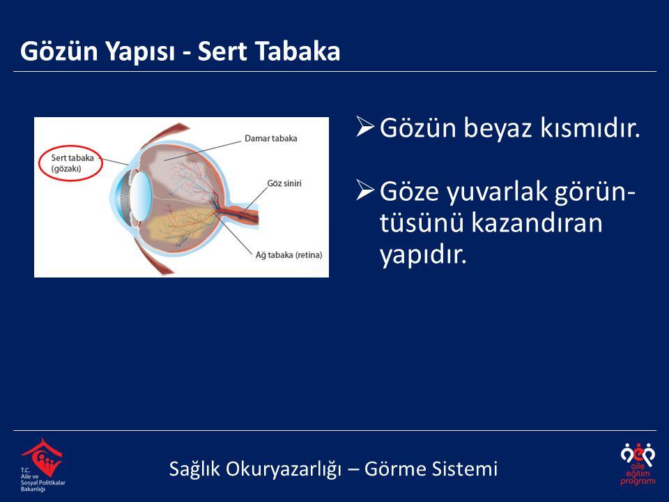 Gözün Yapısı - Sert Tabaka