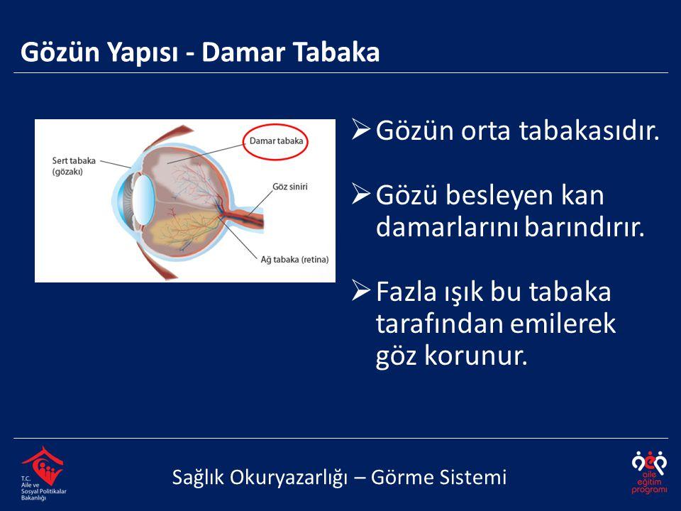 Gözün Yapısı - Damar Tabaka