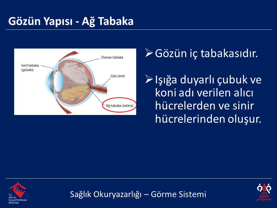 Gözün Yapısı - Ağ Tabaka
