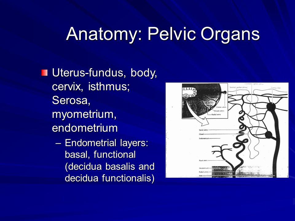 Anatomy: Pelvic Organs