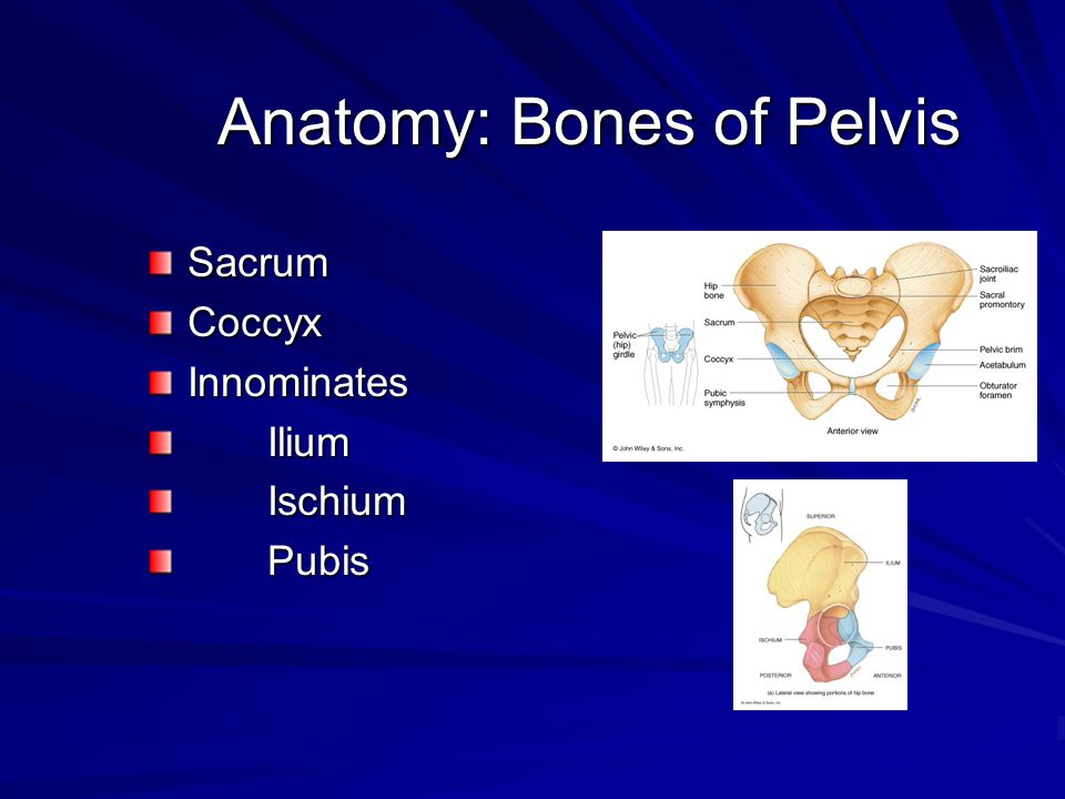 Anatomy: Bones of Pelvis