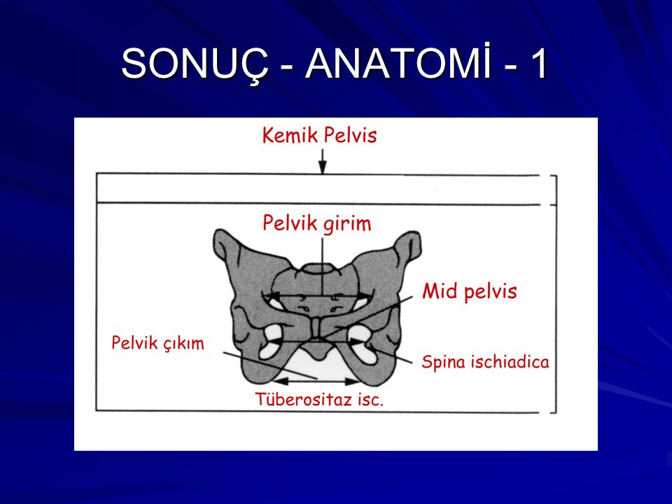 SONUÇ - ANATOMİ - 1