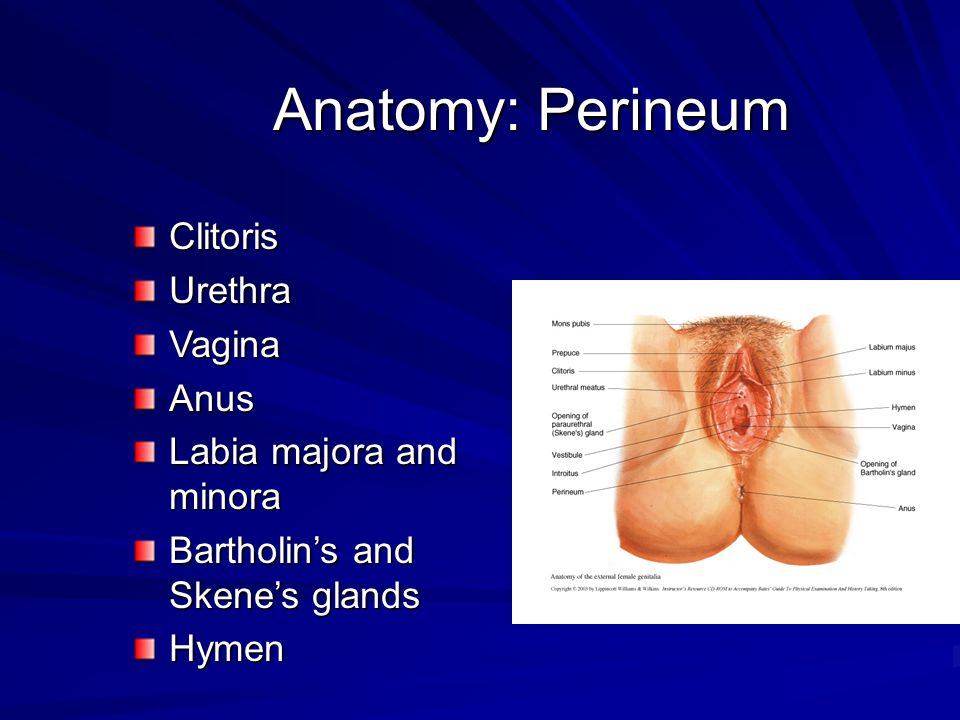 Anatomy: Perineum Clitoris Urethra Vagina Anus Labia majora and minora