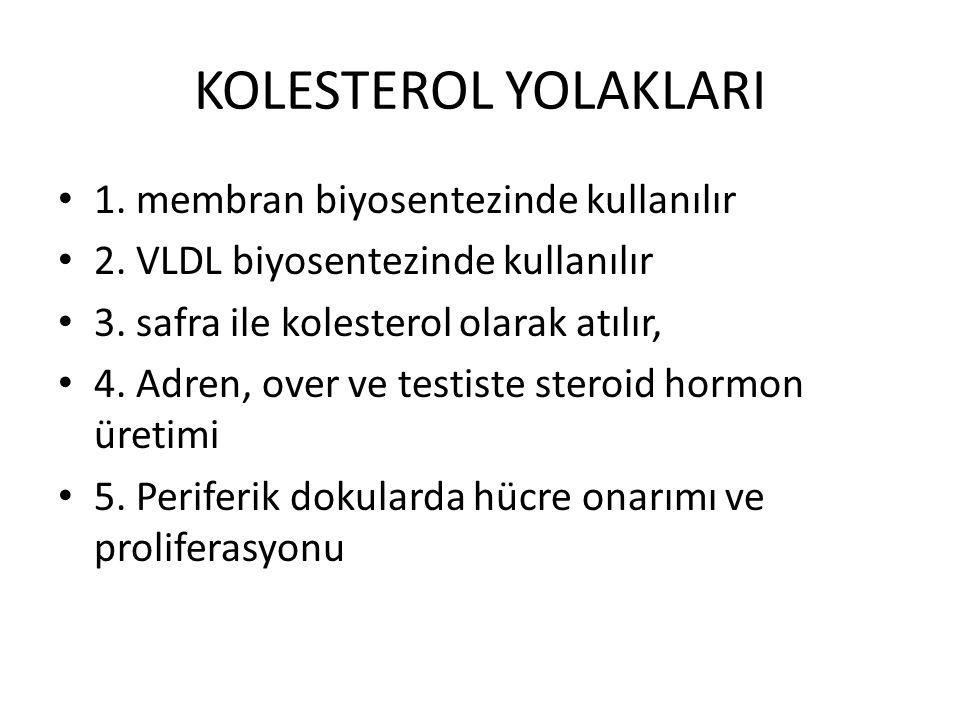 KOLESTEROL YOLAKLARI 1. membran biyosentezinde kullanılır