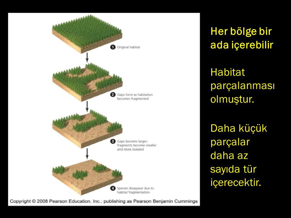 Her bölge bir ada içerebilir.. Habitat parçalanması olmuştur. Daha küçük. parçalar. daha az. sayıda tür.