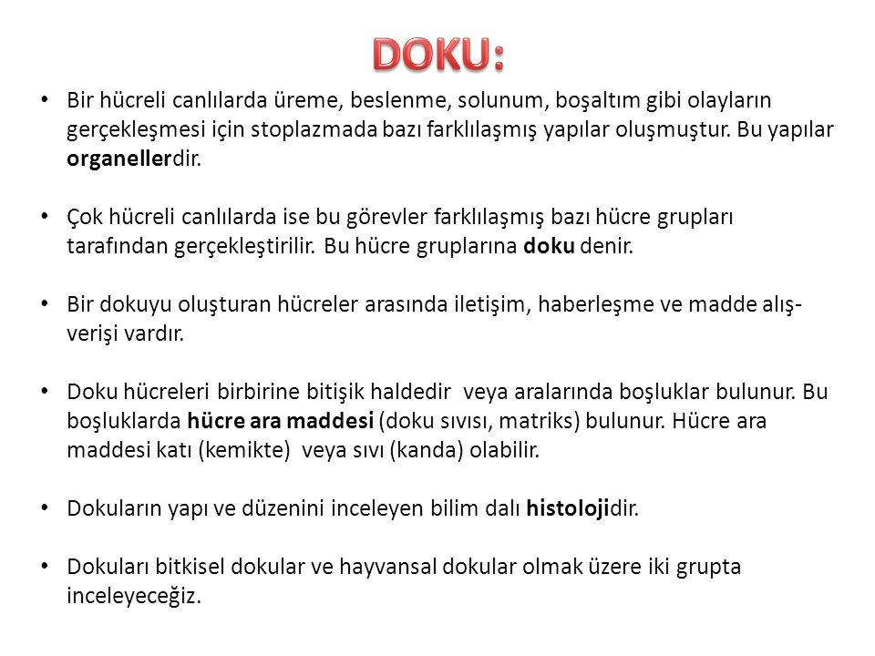 DOKU: