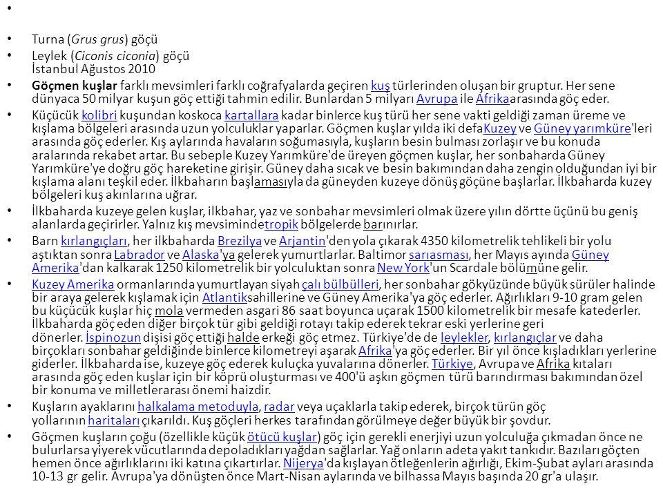 Turna (Grus grus) göçü Leylek (Ciconis ciconia) göçü İstanbul Ağustos 2010.